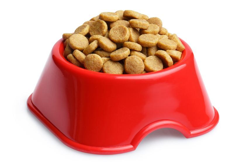 Miska z karmą na białym tle, a także karma Ontario dla psów, jej skład, właściwości i dawkowanie