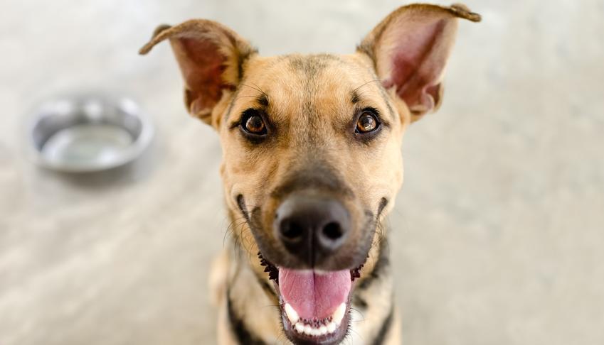 Pies przy misce z karmą, a także karma Frolic dla psów, jej skład, właściwości i dawkowanie