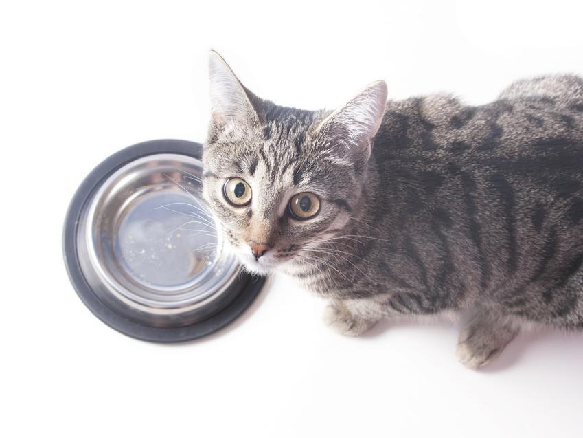 Kot przy misce z karmą, a także karma dla kota Royal Canin Sterilised, jej skład i dawkowanie
