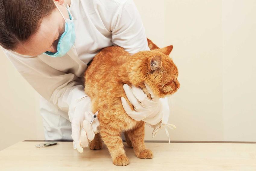 Szczepienie kota u weterynarza, czyli koszt szczepień oraz terminy szczepień dla kotów