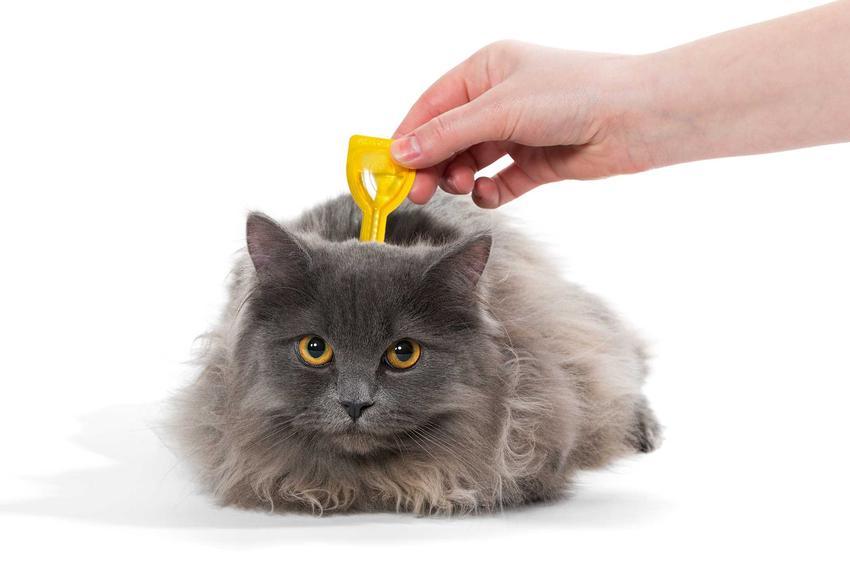 Krople na odrobaczanie u kota podawane na kark, a także rodzaje, ceny, zastosowanie, działanie