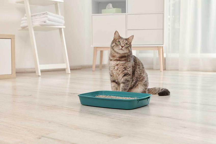 Kot siedzący przy kuwecie wypełnionej żwirkiem kukurydzianym, a także producenci, informacje o żwirku, opinie, zastosowanie