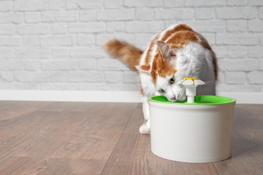 Kot podczas picia z fontanny dla kota oraz polecane poidełko dla kotów
