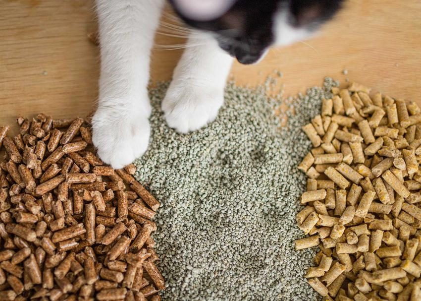 Różne rodzaje żwirku dla kota na podłodze, a także rodzaje, składy, ceny i opinie właścicieli