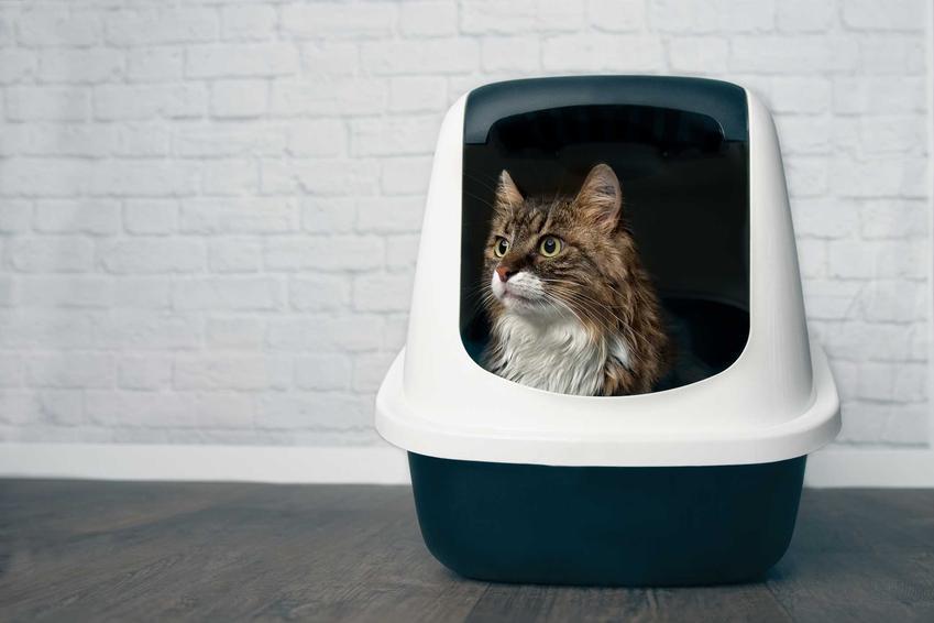 Kuweta zamknięta ze żwirkiem Benek i kot w środku, a także rodzaje, porady, ceny i opinie