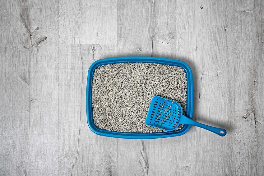 Żwirek bentonitowy dla kota w niebieskiej kuwecie z niebieskimi grabkami, a także zastosowanie, skład, producenci, rodzaje oraz ceny