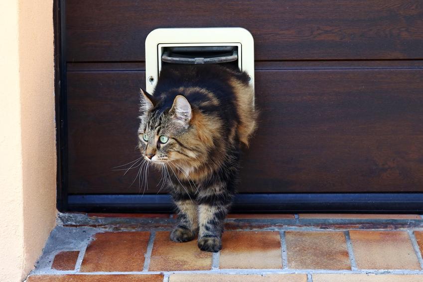 Kot przechodzący przez drzwiczki dla kota, czyli wejście na kota