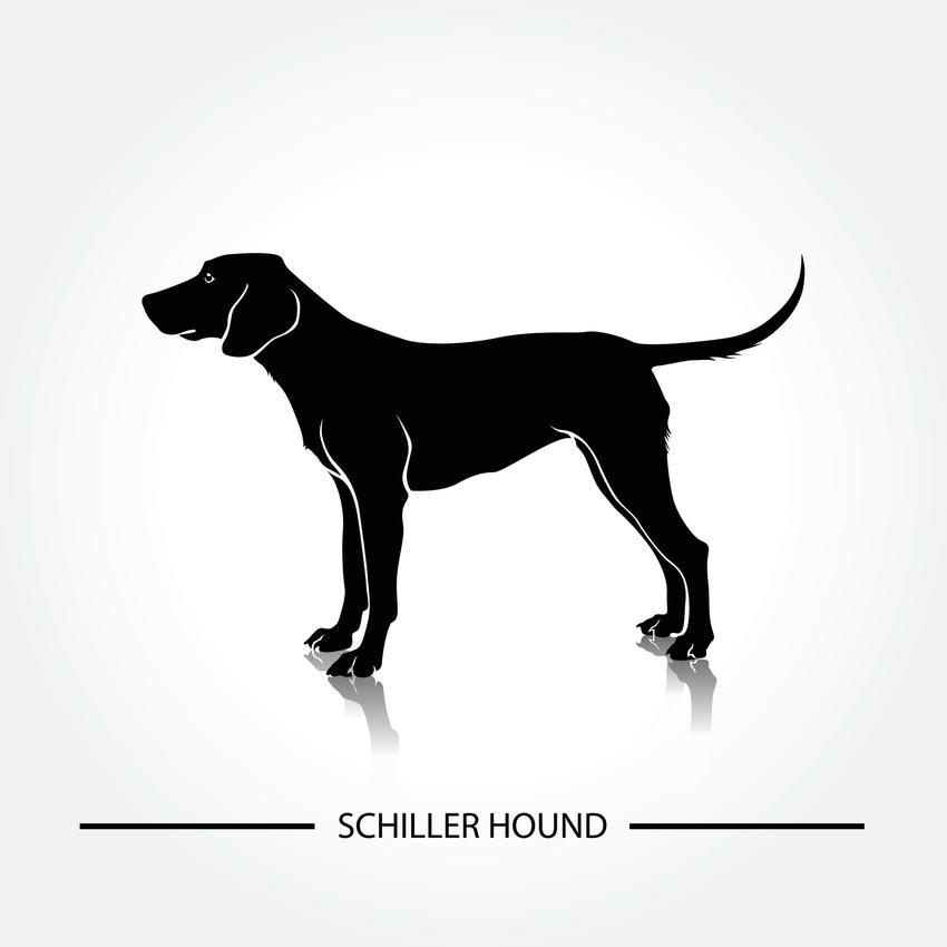 Pies rasy ończy Schillera z profilu na grafice, a także jego charakter, cena, usposobienie i hodowla