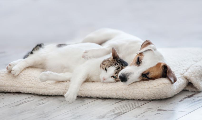 Pies z kotem śpiący na posłaniu, a także posłania dla psów, ceny i rodzaje
