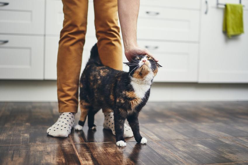 Kot przy nogach właściciela w kuchni, a także długość życia kota, czyli ile żyją koty