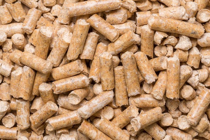 Żwirek dla królika i jego rodzaje, jak drewniany, niezbrylający, silikonowy