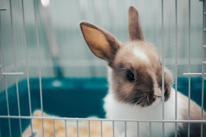 Królik w klatce oraz żwirek dla królika, drewniany, niezbrylający, silikonowy i inne rodzaje