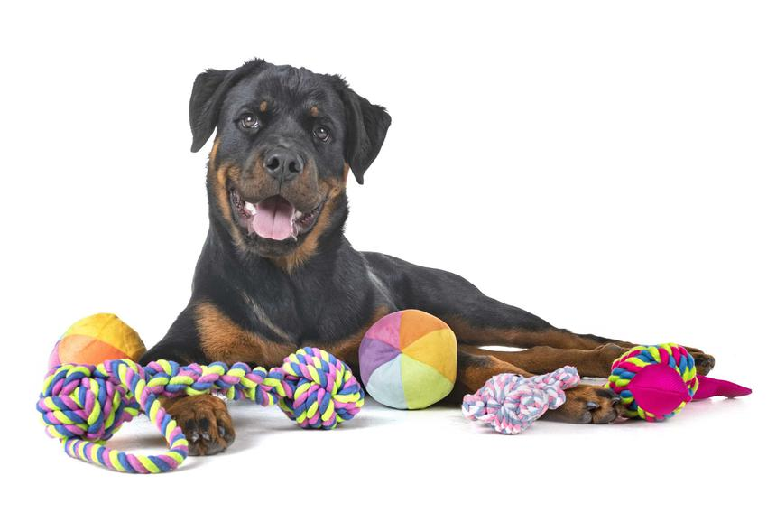 Pies leżący na podłodze z różnymi zabawkami, a także inne fajne zabawki dla dużych psów