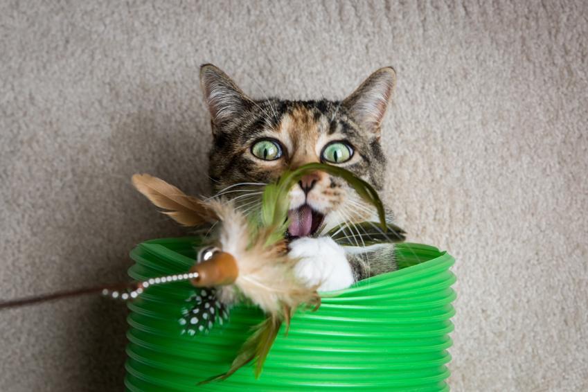 Najlepsze i polecane zabawki dla kota, czyli ranking zabawek dla małych kotków i kociąt