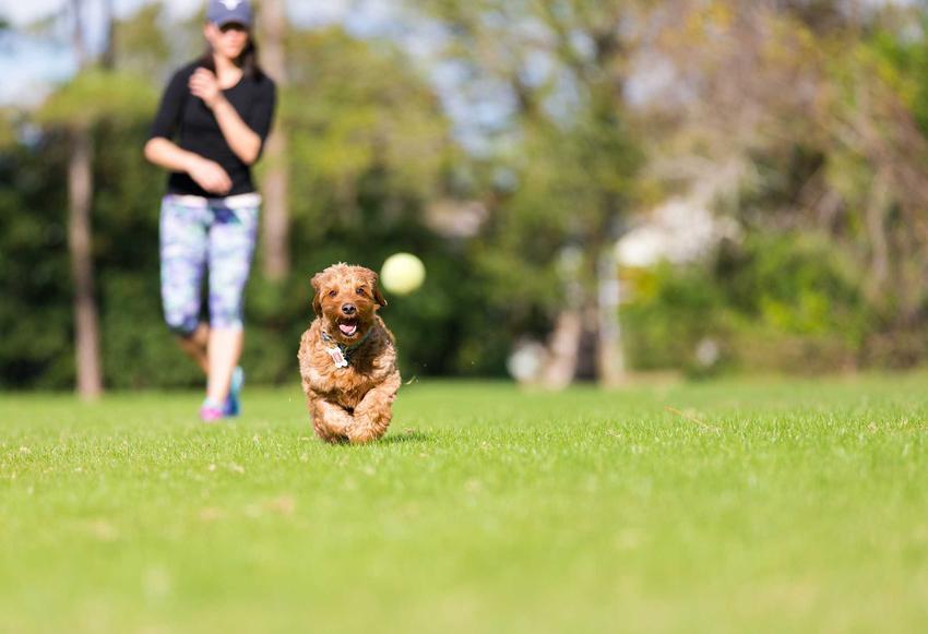 Zabawa z małym psem w łapanie piłeczki, a także potrzeby psów, pomysły i propozycje