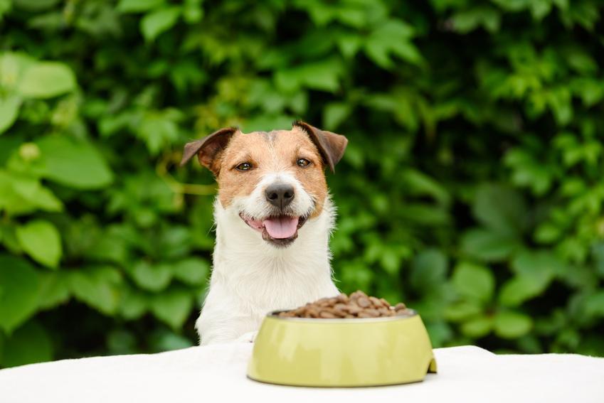 Pies podczas karmienia przy stole, a także karma dla psa Eukanuba Dermatosis, jej skład, rodzaje i dawkowanie