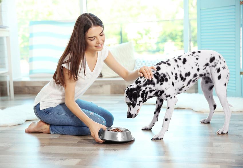 Pies podczas karmienia, a także karma dla psa Bozita, jej skład, rodzaje i dawkowanie