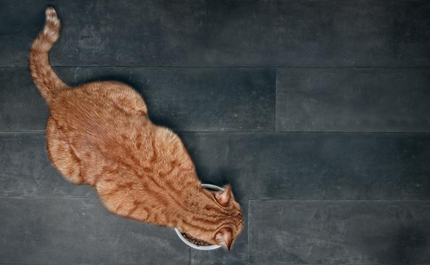 Kot jedzący karmę z miski oraz dla karma dla kota Feringa, jej rodzaje, cena i skład