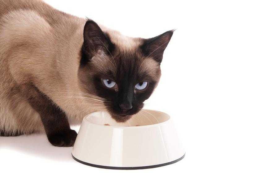 Kot przy misce z karmą, a także karma dla kota Feringa, jej skład i dawkowanie