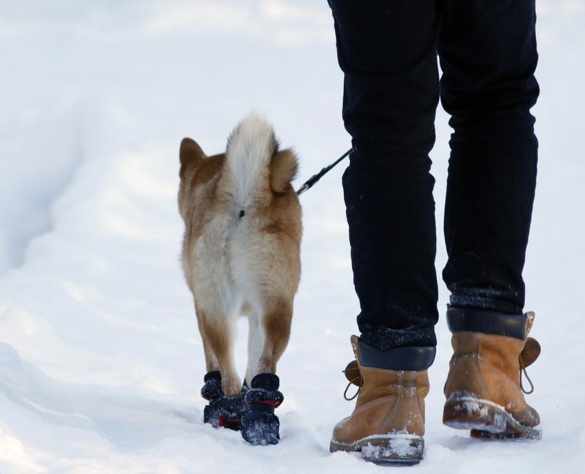 Pies w bucikach z właścicielem na śniegu, a także jakie buciki dla psa na zimę wybrać