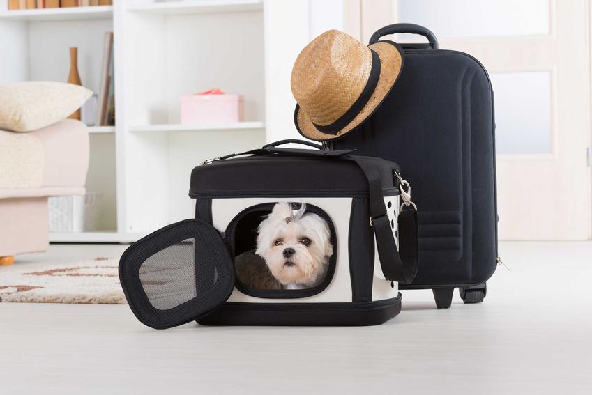 Transporter dla psa z maltańczykiem w środku, a także producenci, rodzaje, ceny, zastosowanie, wymiary transporterów