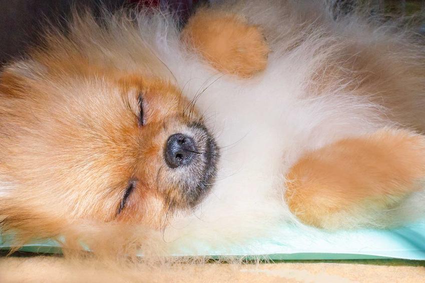 Pies leżący na macie chłodzacej dla psów, a także wady, zalety, opinie o matach, rodzaje i zastosowanie