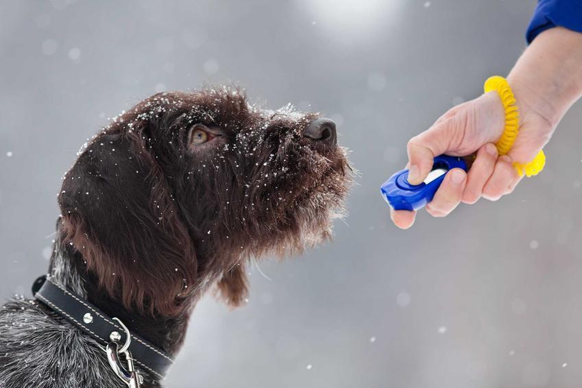 Kliker dla psa w dłoni, a także tresowany klikerem pies, oraz zastosowanie, rodzaje oraz opinie krok po kroku
