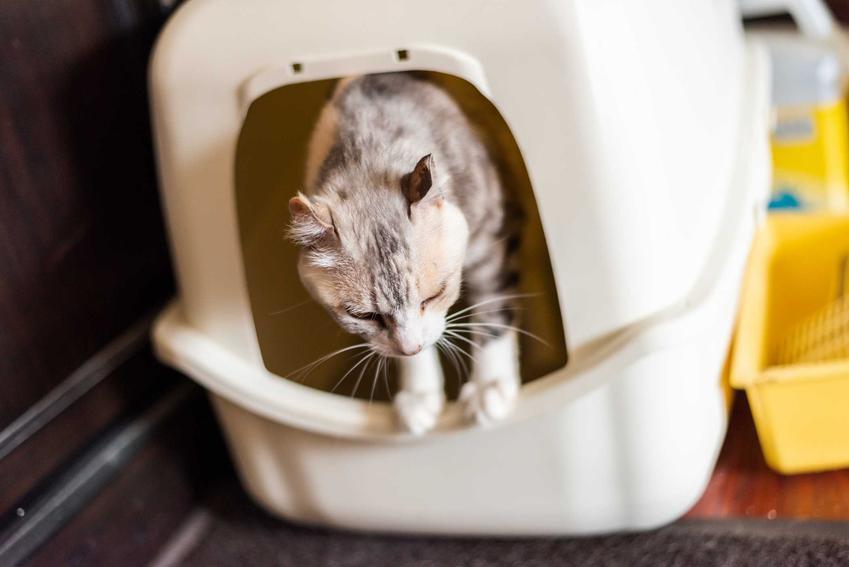 Kot w kuwecie Curver, a także opinie, porady praktyczne, ceny oraz najbardziej popularne modele
