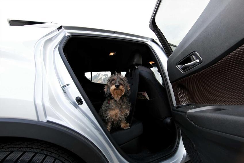Pies siedzący w samochodzie przy otwartych drzwiach, a także fotelik samochodowy i siedzisko do samochodu dla psów