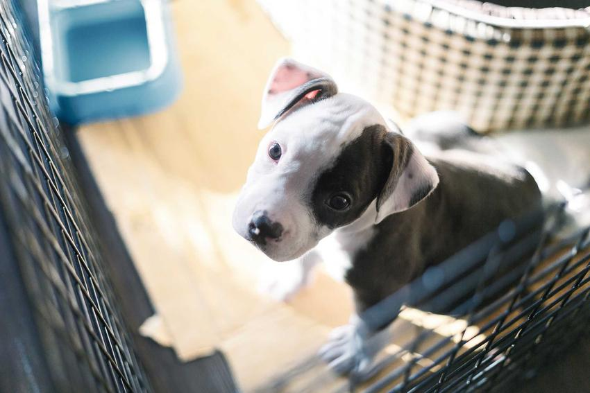 Małhy pies w klatce kennelowej, a także ceny, zastosowanie, opinie oraz opis i zalrty klatek kennelowych