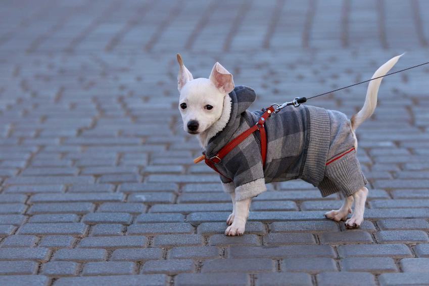 Pies w kubraczku w kratę, a także rodzaje, ceny kubraczków, opinie i zastosowanie kubraczków dla psa