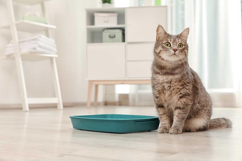 Kot siedzący przy kuwecie, a także biegunka u kota - objawy, przyczyny, leczenie, porady, dieta i domowe sposoby