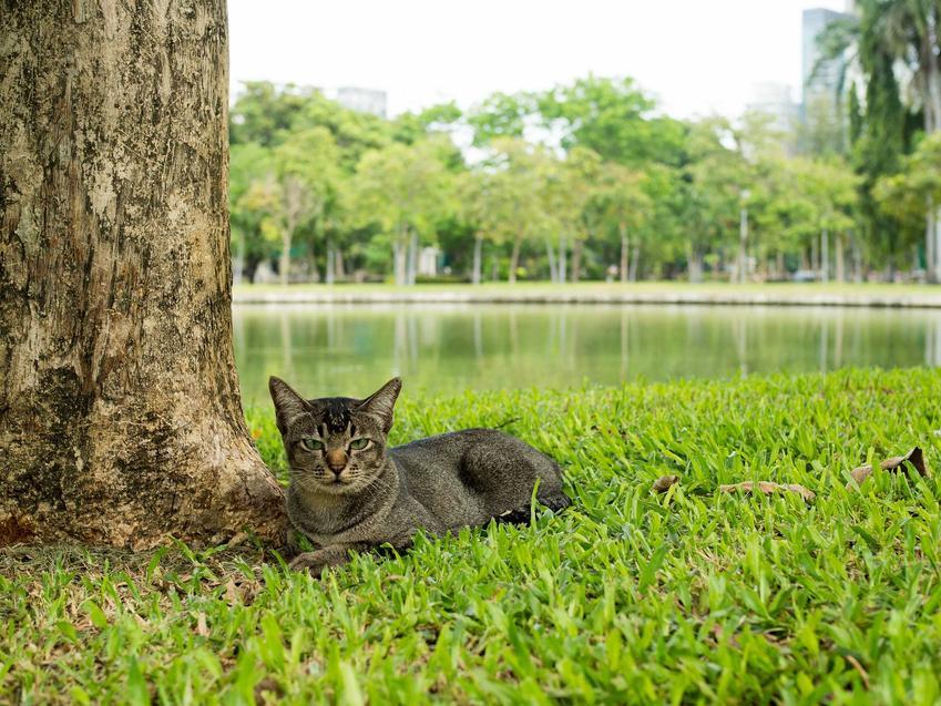 Wściekły kot siedzący pod drzewem, a także pierwsze objawy wścieklizny u kota, czyli objawy, zagrożenia, profilaktyka krok po kroku