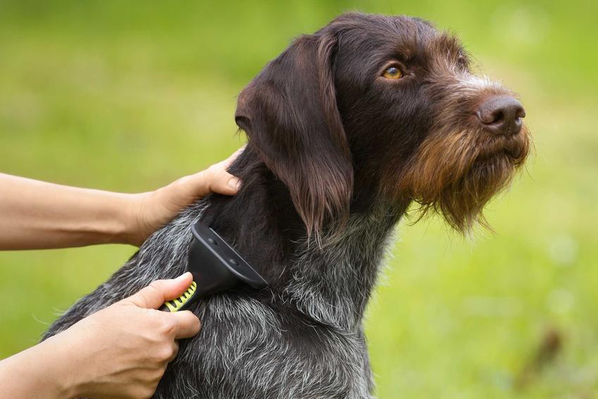 Pies wyczesywany szczotką, a także najlepsze szczotki dla psa: modele, ceny oraz opinie użytkowników na ich temat