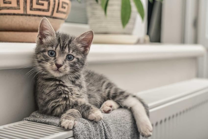 Kot leżący na ręczniku na parapecie, a także legowiska dla kota na kaloryfer, ich rodzaje, ceny, zastosowanie i samodzielne wykonanie