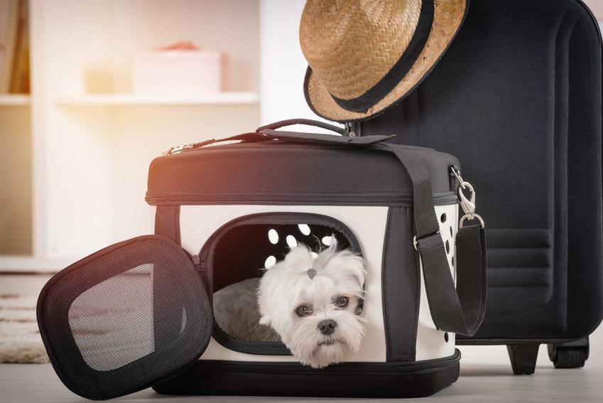 Pies rasy maltańczyk w torbie dla psa, a także producenci, zdjecia oraz opinie dotyczące najlepszych toreb dla psa