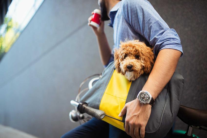 Pies w torbie dla psa przewieszonej przez ramię rowerzysty, a także modele, producenci, opinie na temat toreb dla psów