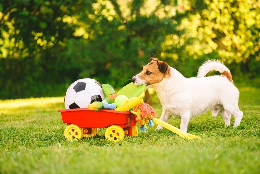 Pies wyciągający zabawki z małego wózka, a także TOP 5 zabawek i gadżetów dla psów małych i dużych