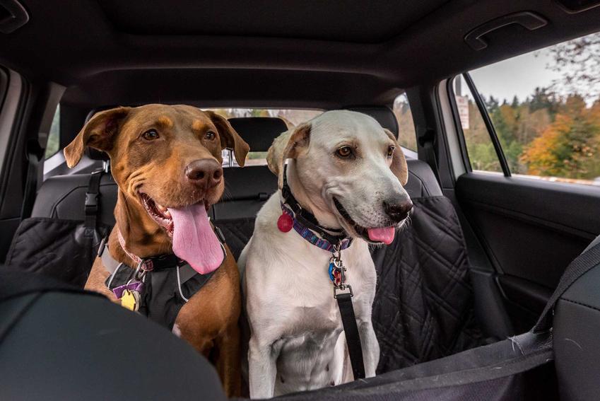 Akcesorium do samochodu dla psów, czyli siedzisko do samochodu dla czworonogów, a także inne akcesoria dla psów