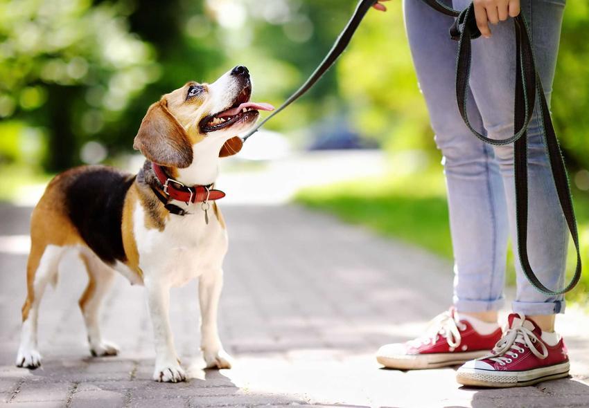 Pies na spacerze z właścicielką trzymająca linkę treningową, a także rodzaje oraz zastosowanie linek do treningu dla psa