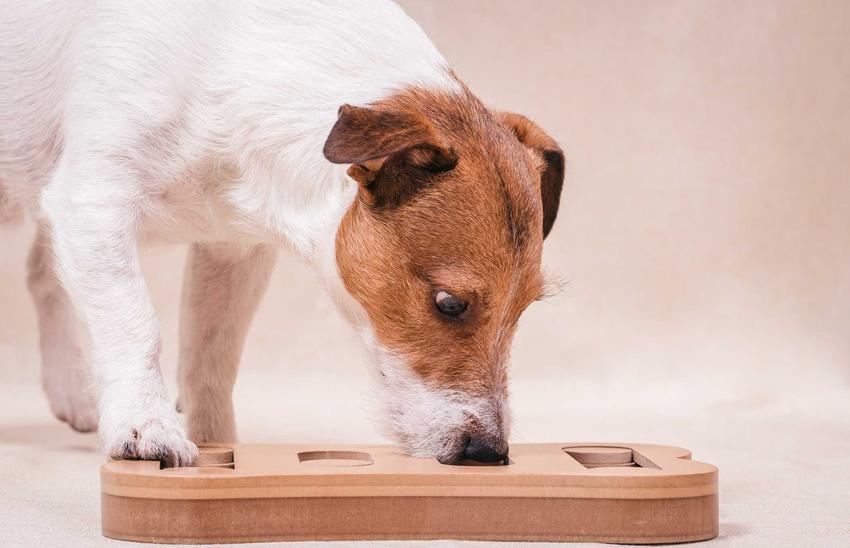 Gra logiczna dla psa, a także inne gry i zabawy dla psów - w co bawić się ze swoim psem