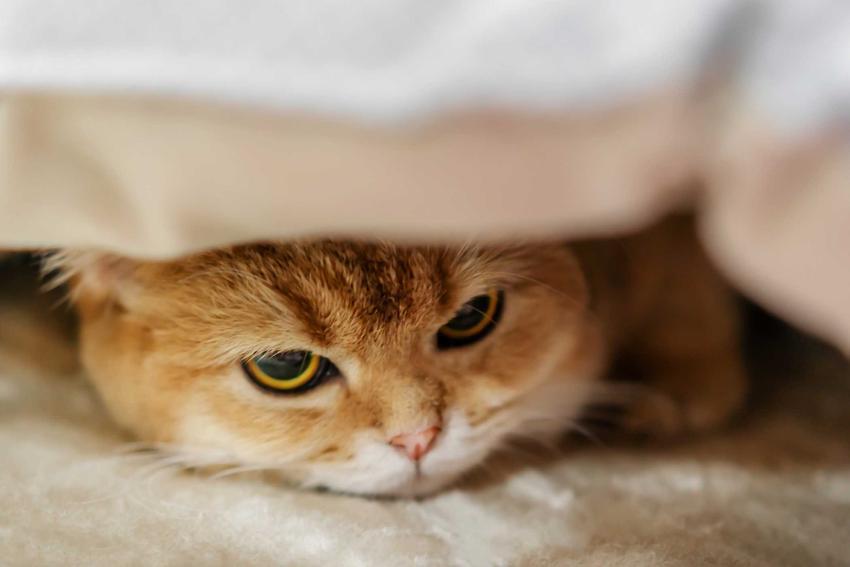 Chory kotek na białaczkę FELV, a także przyczyny choroby, objawy, sposoby leczenia, leki, działanie, rozpoznanie i rokowania
