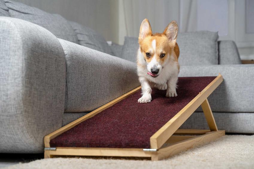 Pies schodzący po rampie dla psów z kanapy, a także schodki dla psa, ich rodzaje, cena, opis oraz samodzielne przygotowanie