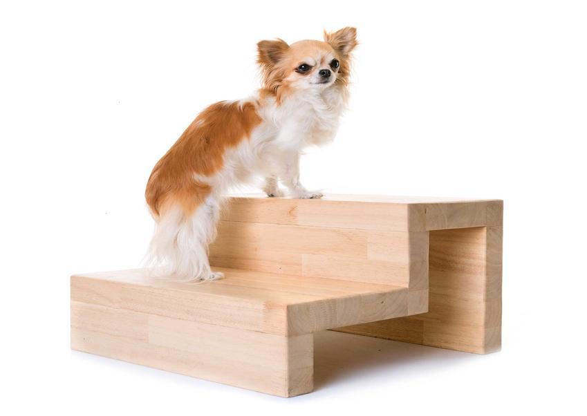 Pies wchodzi po schodkach dla psów, a także rodzaje, opis, samodzielne przygotowanie schodków oraz cena za gotowe