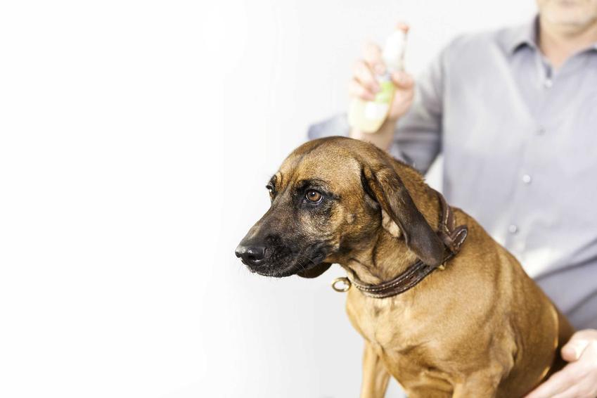 Mężczyzna perfumujący psa, a także perfumy dla psów, różne rodzaje, opinie użytkowników, producenci oraz ceny