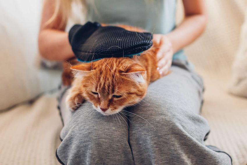 Kot na kolanach właścicielki czesany rękawicą do czesania kota, a także rodzaje, ceny oraz opinie
