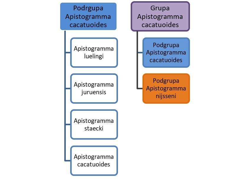 Schemat ukazujący pochodzenie pielęgniczki kakadu, a także informacje o gatunku: wymagania, rozmnażanie i porady dla akwarystów