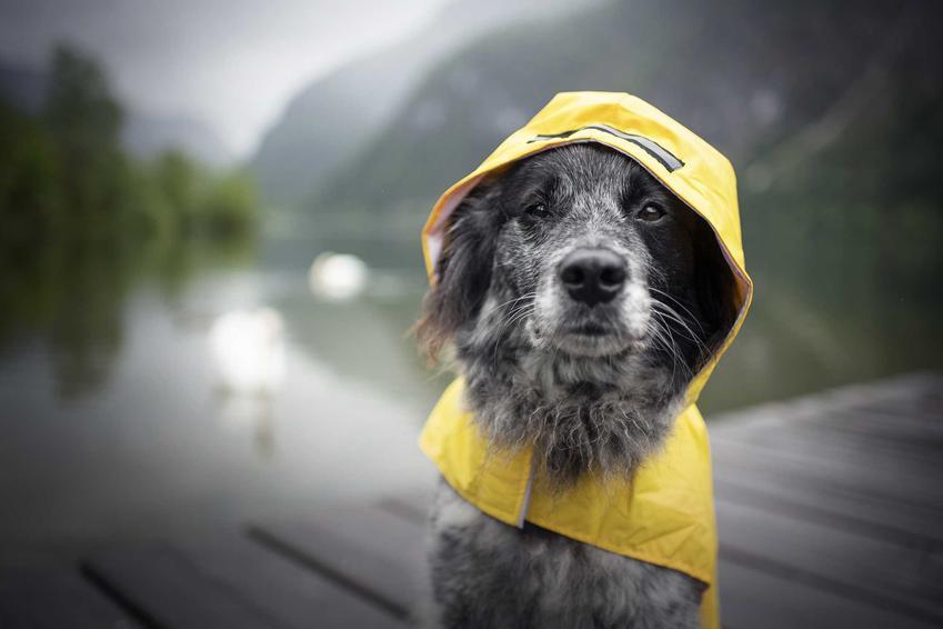 Pies na molo siedzący w płaszczu przeciwdeszczowym dla psów, a także rodzaje oraz opinie o płaszczach