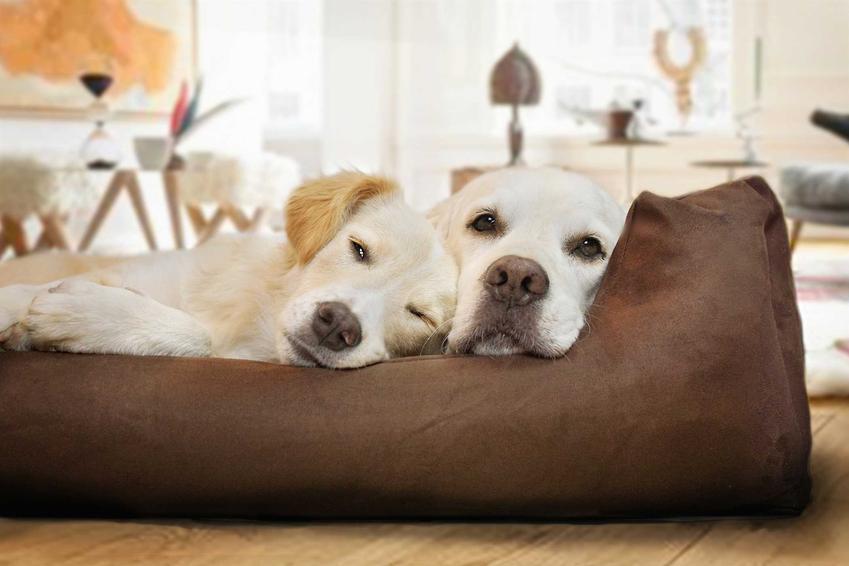 Psy leżące w legowisku ortopedycznym dla psów, a także rodzaje legowisk, cena, zastosowanie oraz porady