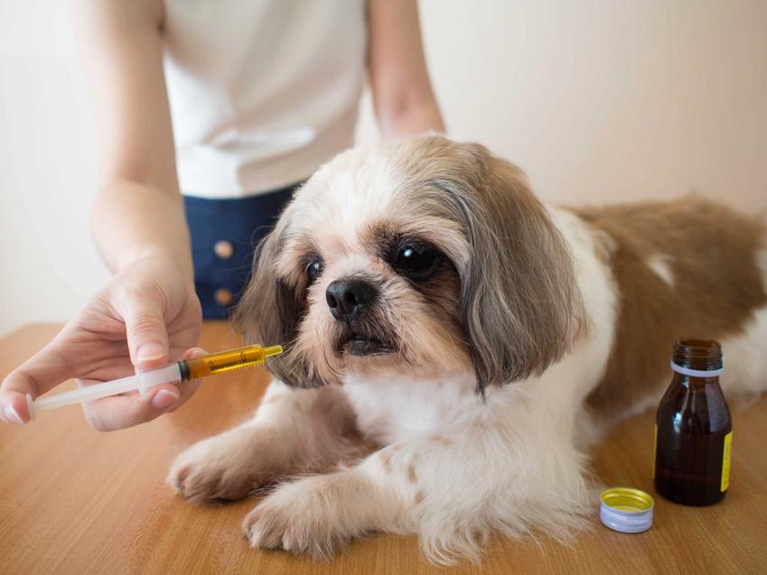 Witaminy dla psa podawane w formie płynu niewielkiemu psu, a także rodzaje, dawkowanie, ceny i zastosowanie oraz działanie